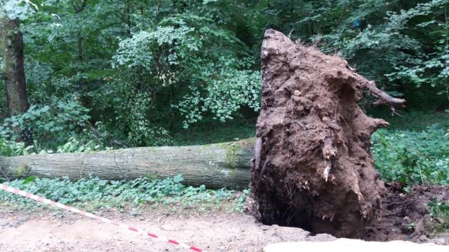 arbre déraciné 20180710
