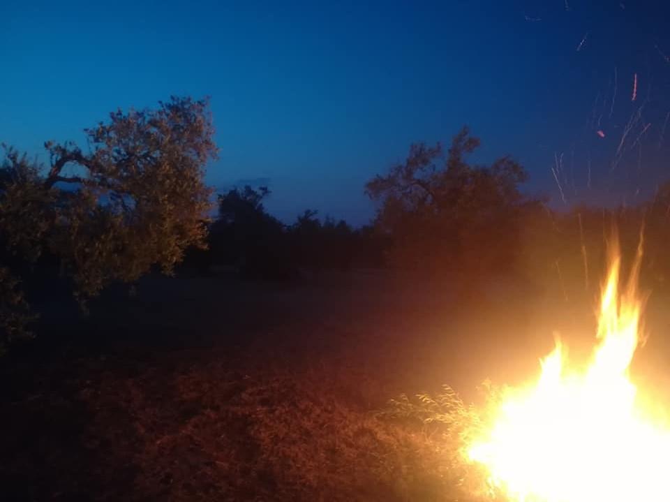 cosecha 2019-20 - Página 4 Vent110