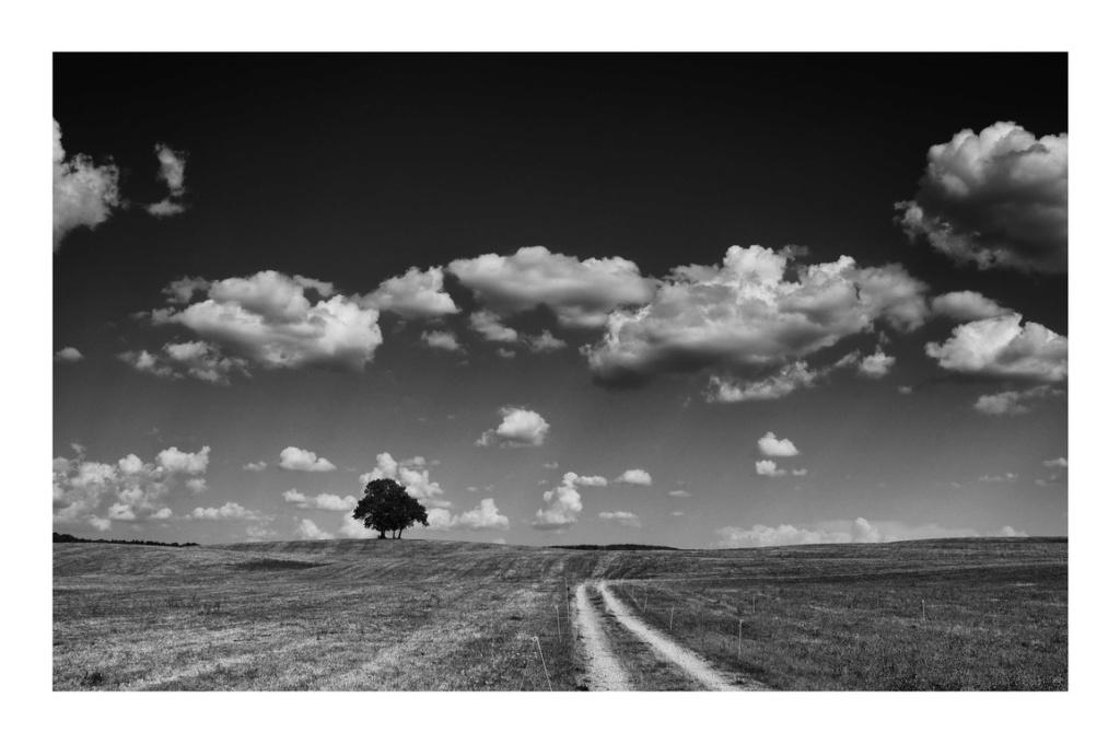 Arbre, Nuages et Chemin P8070011