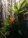 Plantes terrarium  Img_2011