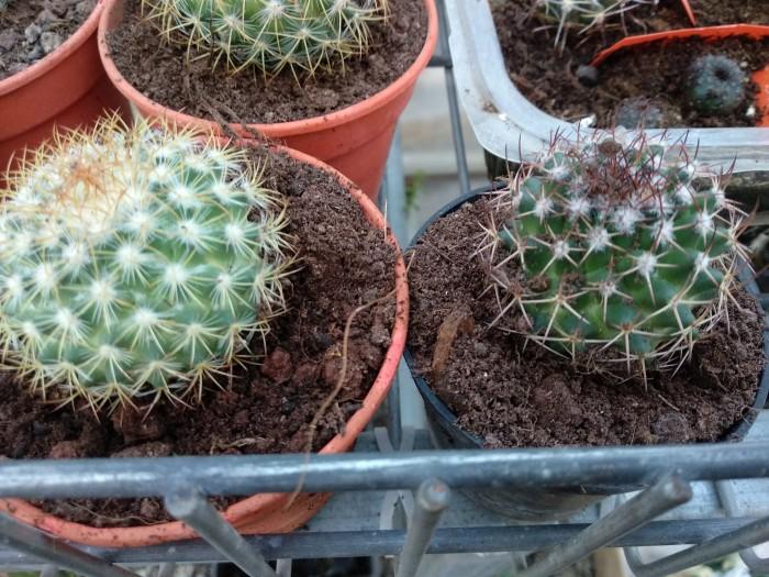 id for seeds growen plants 410