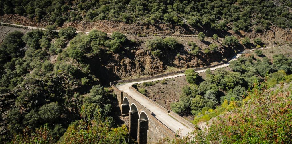 26 de Octubre ruta de la sierra pobre a la tejera negra por la muralla china.  - Página 3 Termin62