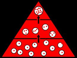 La bioaccumulation: petites substances, grosses conséquences Pirami10