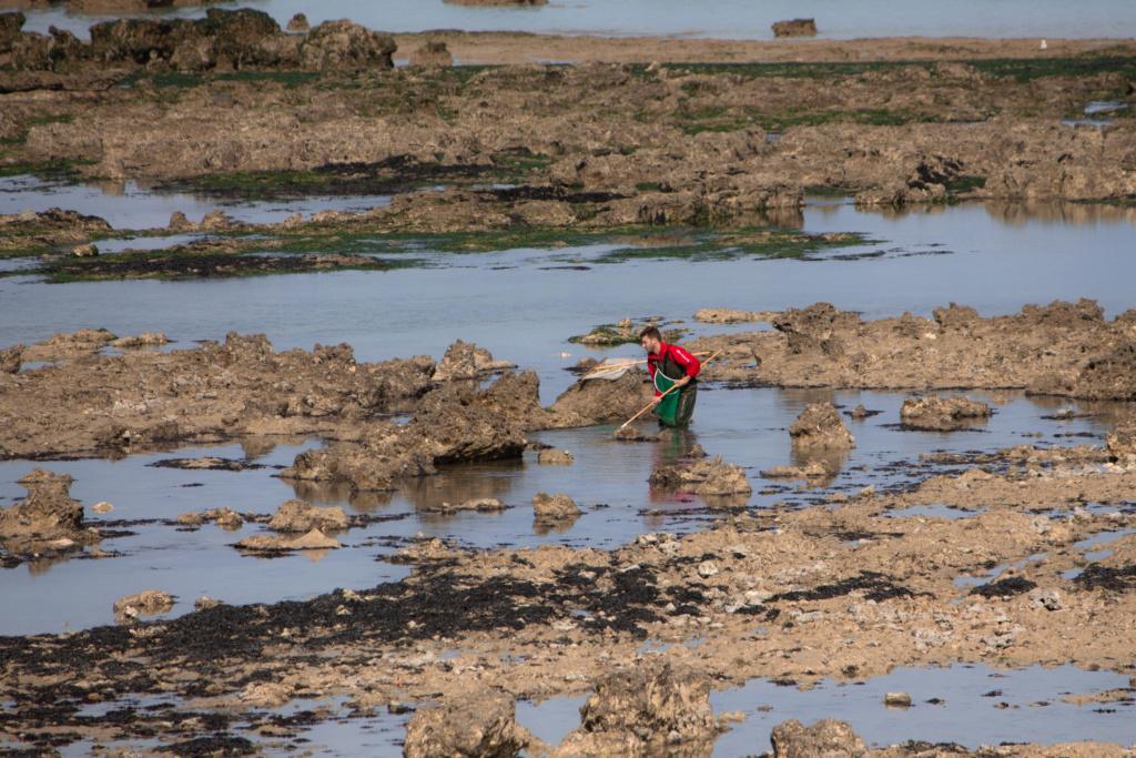 Cueillette de crustacés Img_2916