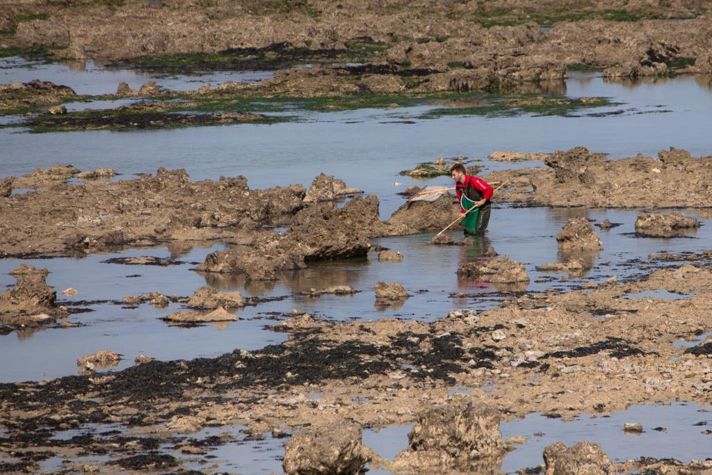 Cueillette de crustacés Img_2921