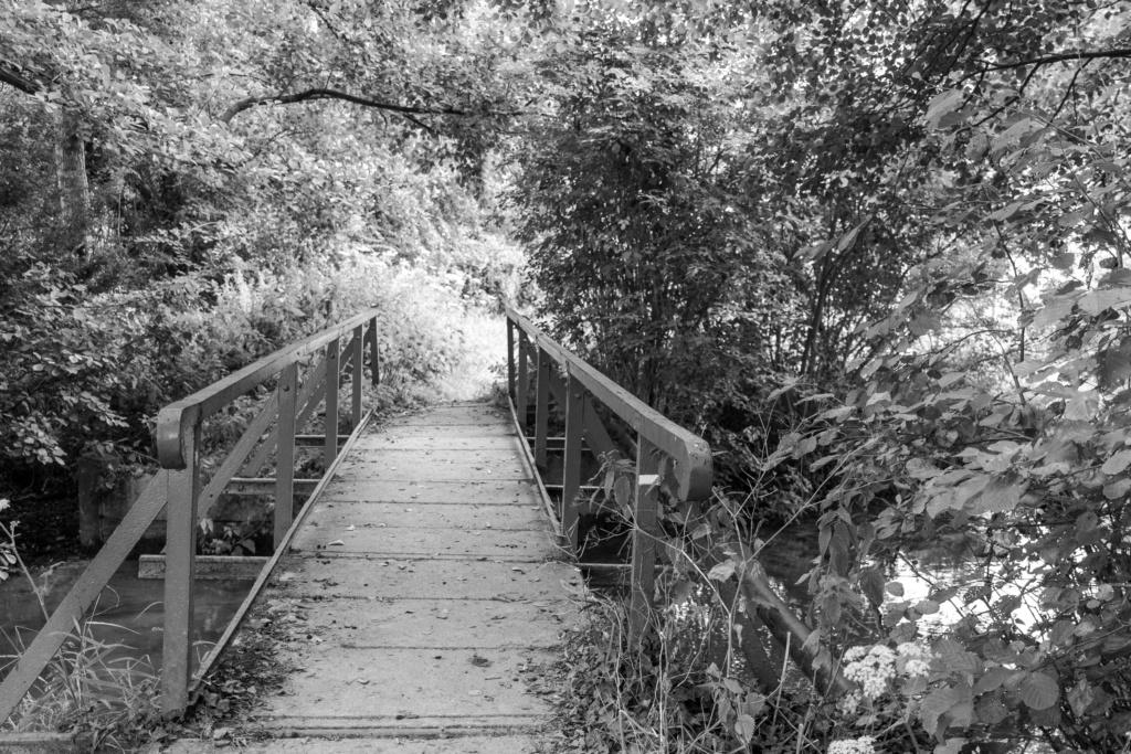 Passerelle dans les bois Img_3010