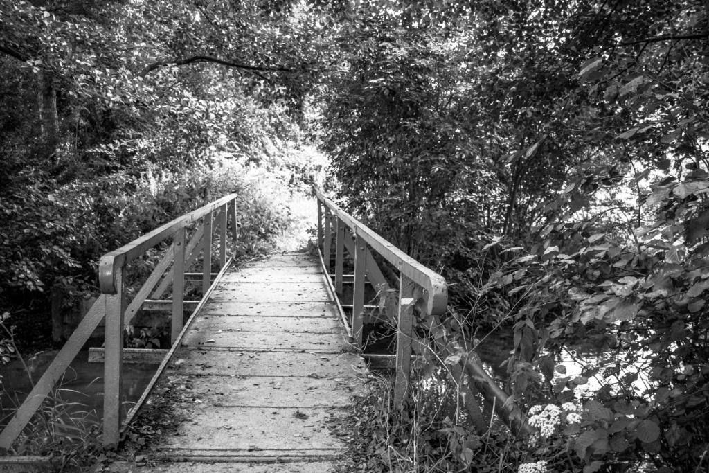 Passerelle dans les bois Img_3012