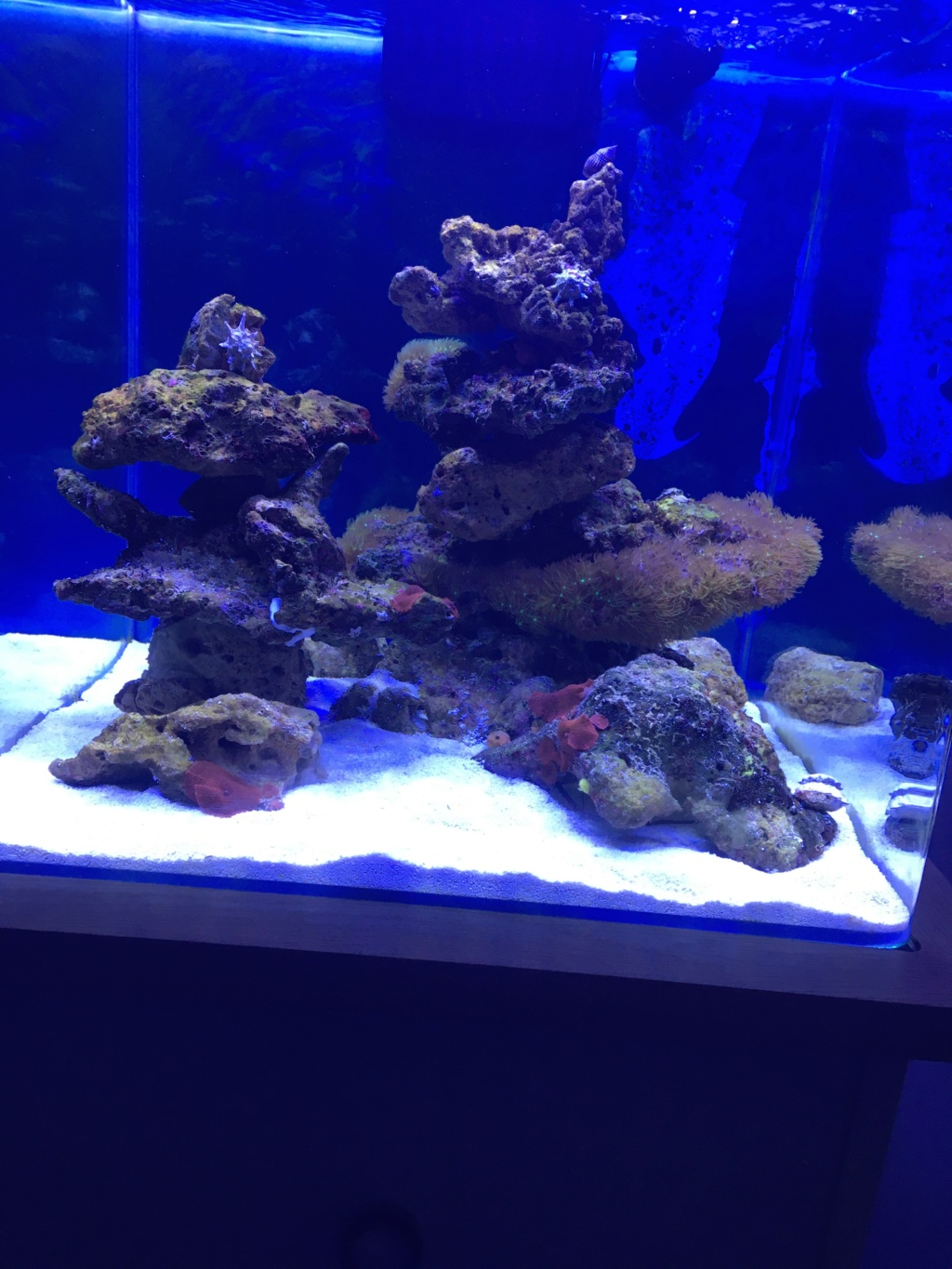 Projet micro reef - Page 6 Img_0317