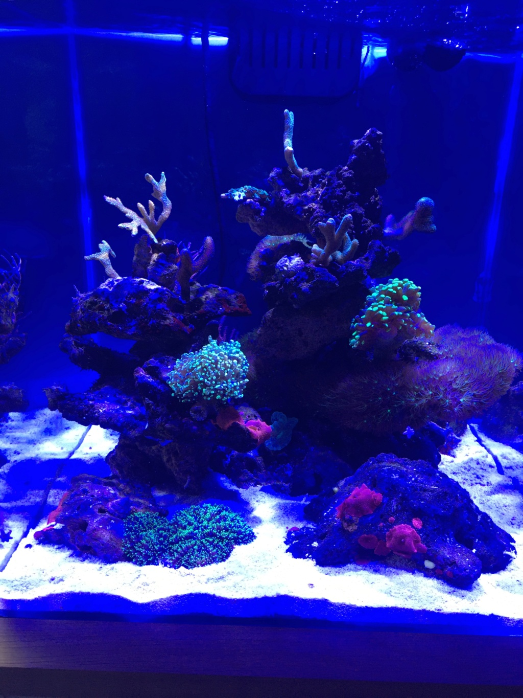 Projet micro reef - Page 9 Img_0410