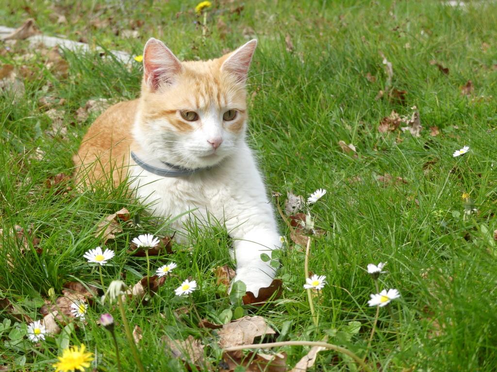 Mon chat en photo (avis) Chat10