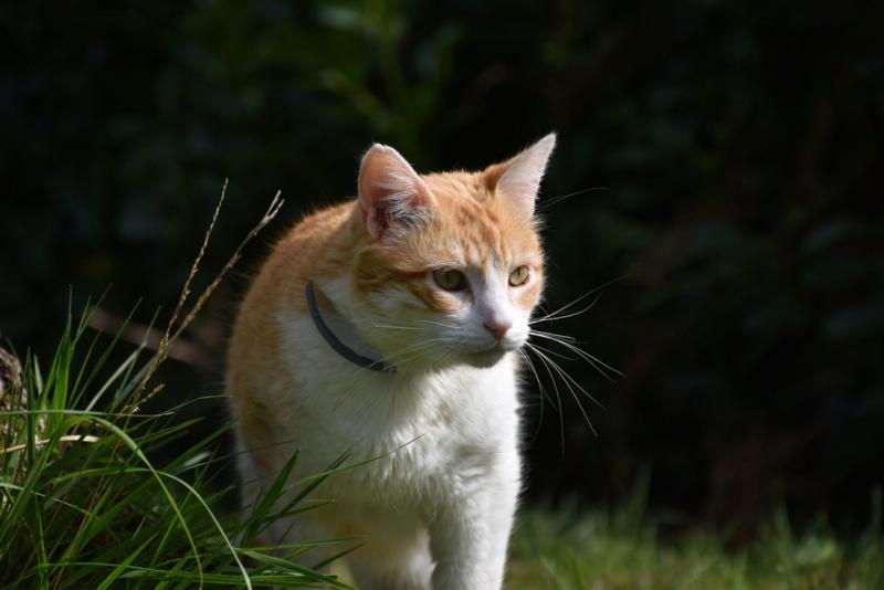 Une nouvelle photo de mon chat  Chat_f10
