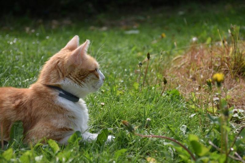Nouveau portrait du chat  Chat_n10