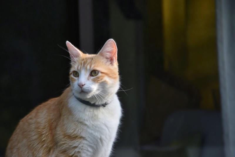 Nouveau portrait du chat  Chat_p10