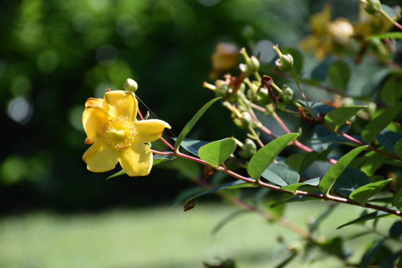 Dans mon jardin (Nouveau pousser) Dsc_0113