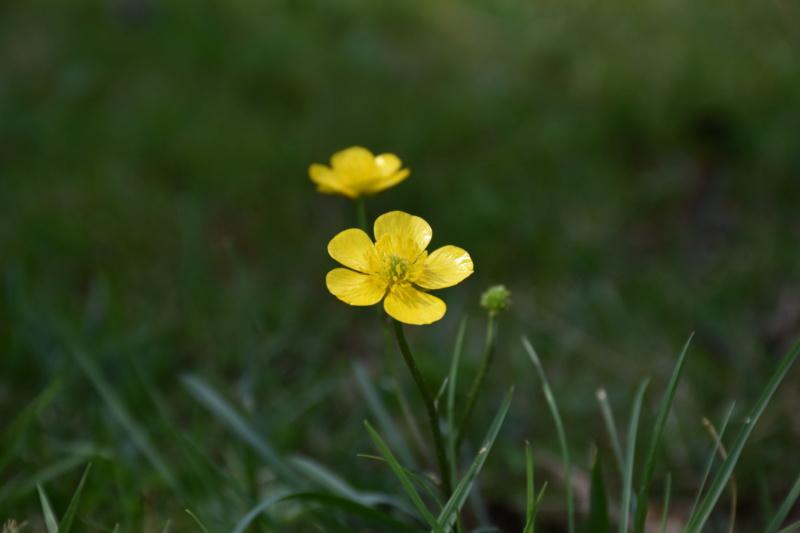 Fleure jaune (Nikon d3500) Dsc_0214