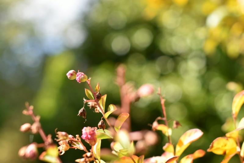 Bonjour (une nouvelle du jardin) Nikon_10