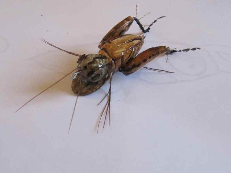 Réalisation d'insectes Img_0036