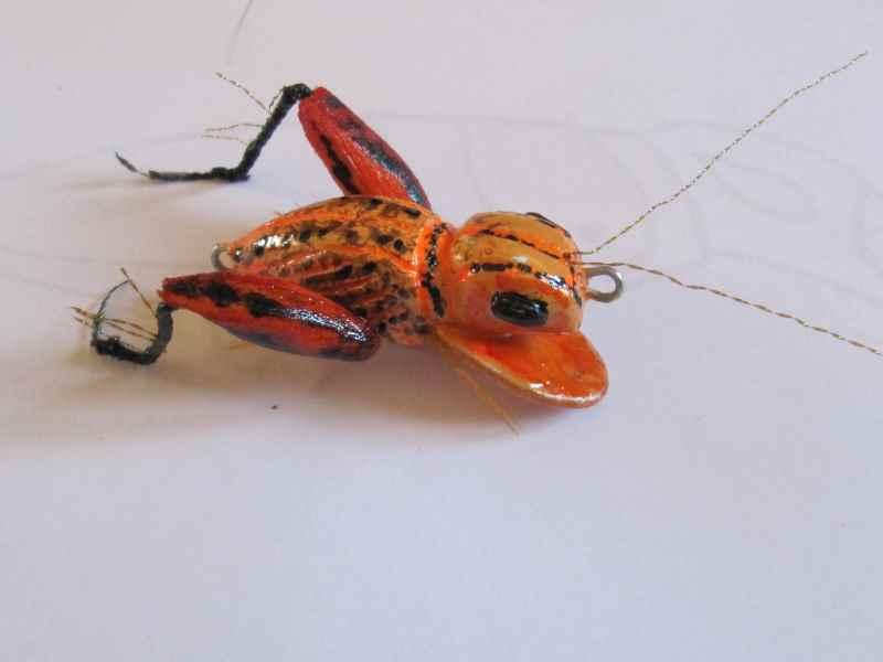 Réalisation d'insectes Img_0037