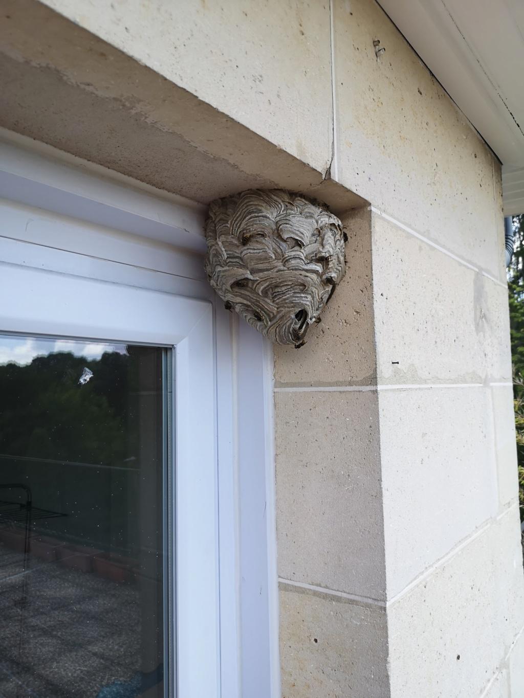 Porte-fenêtre - Dolichovespula Img_2010