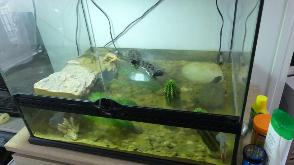 Reconversion de terrarium besoin de conseil P1090914