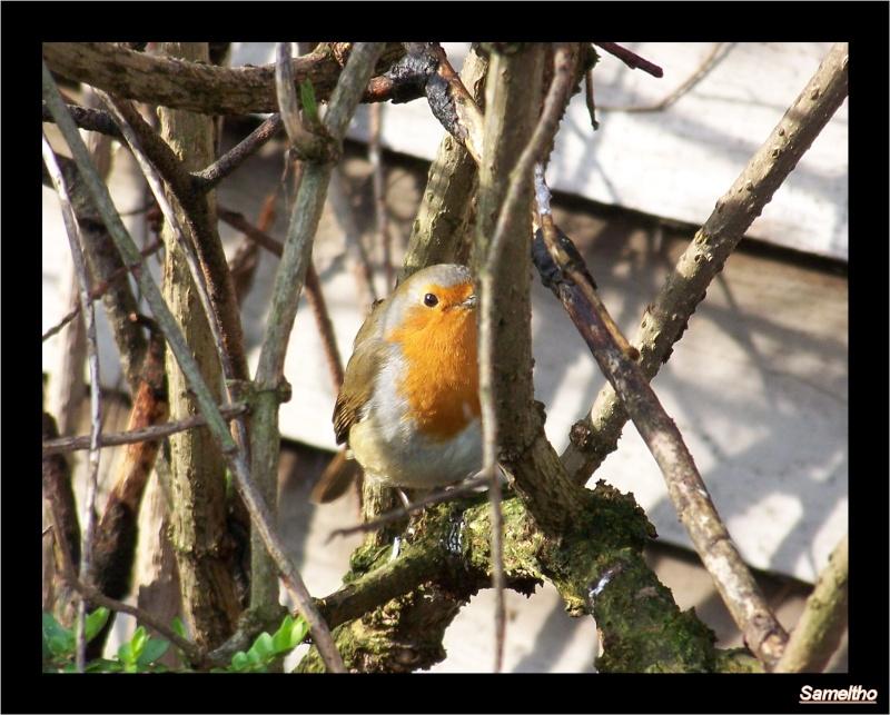 Les oiseaux sauvage que l'on rencontre dans le zoo 00310