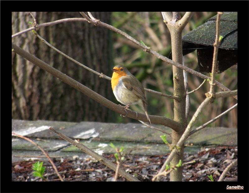 Les oiseaux sauvage que l'on rencontre dans le zoo 00710