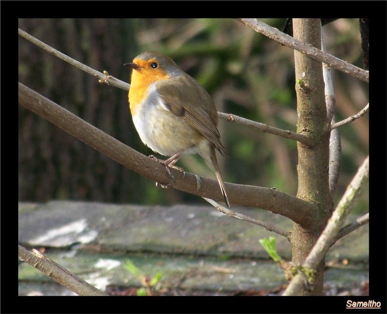 Les oiseaux sauvage que l'on rencontre dans le zoo 00810