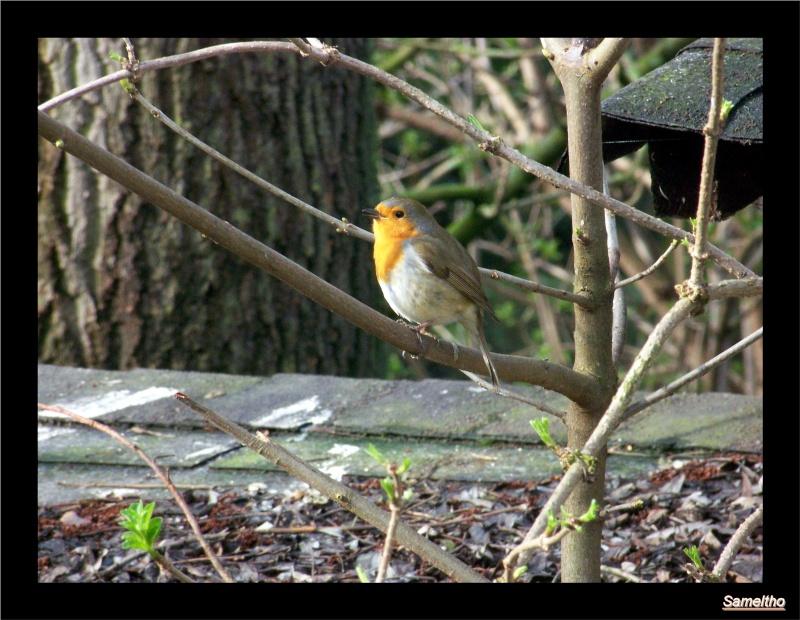 Les oiseaux sauvage que l'on rencontre dans le zoo 00910
