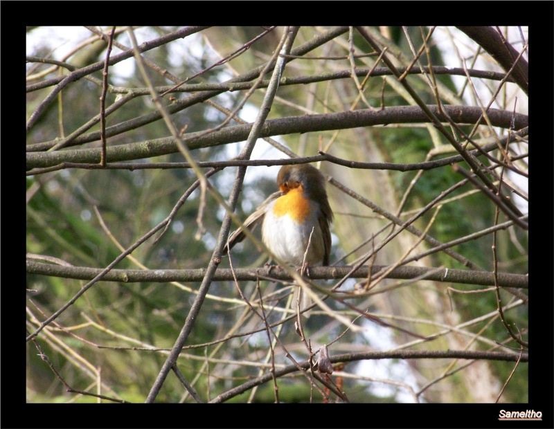 Les oiseaux sauvage que l'on rencontre dans le zoo 01610