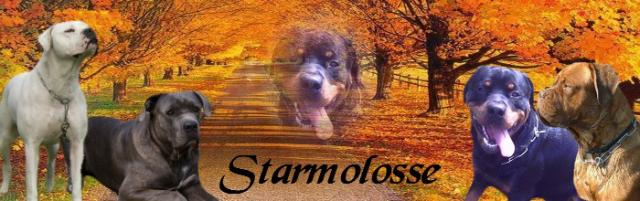 *~* STARMOLOSSE *~*