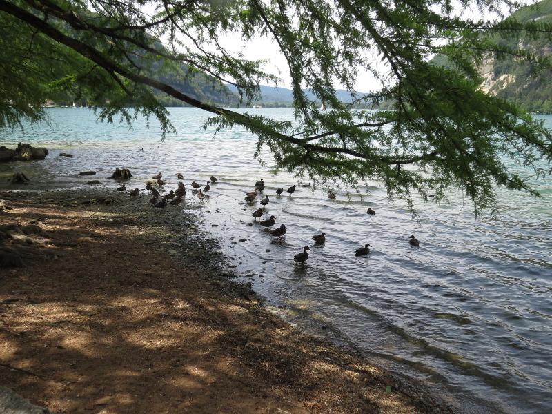 Chadka et Yocco au bord des lacs 010_ca10