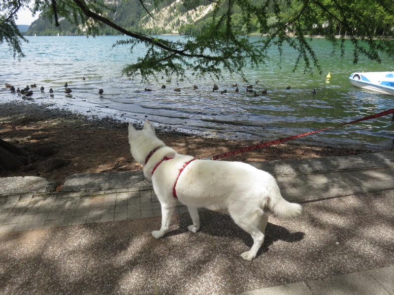 Chadka et Yocco au bord des lacs 011_yo10