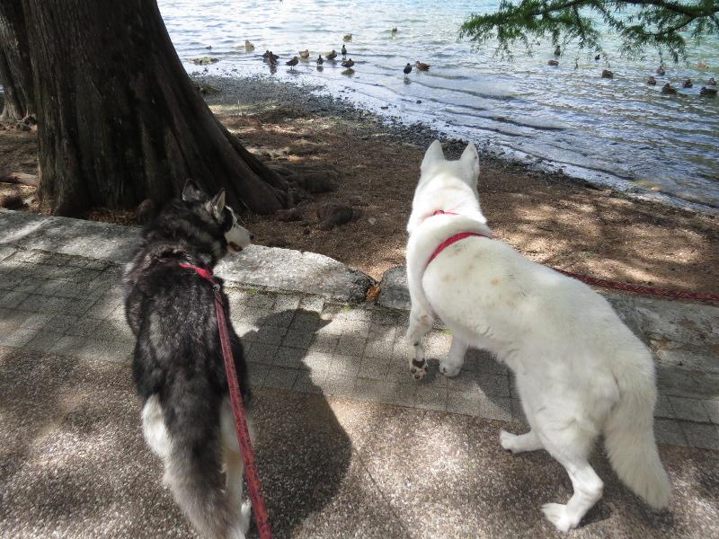 Chadka et Yocco au bord des lacs 012_ch10