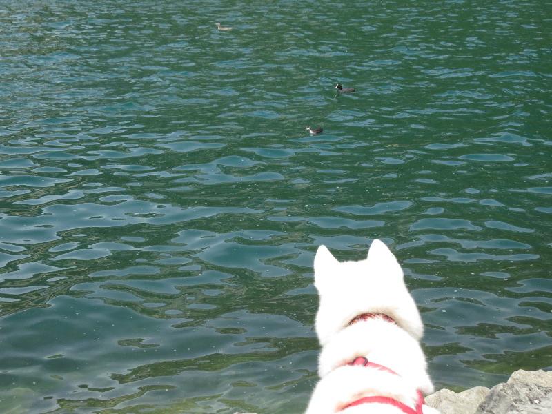 Chadka et Yocco au bord des lacs 017_yo10