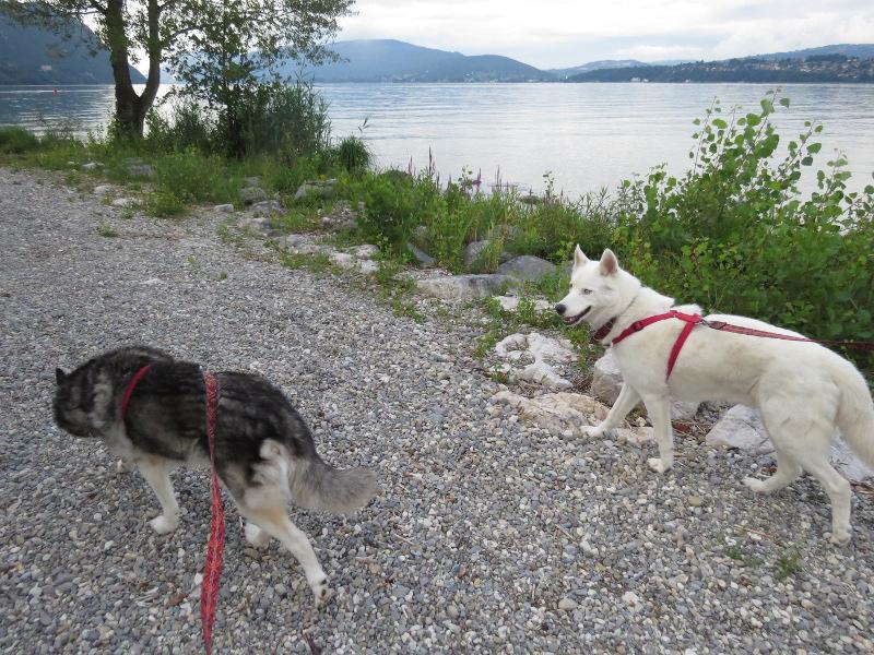 Chadka et Yocco au bord des lacs 023_ch10