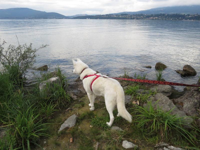 Chadka et Yocco au bord des lacs 024_yo10