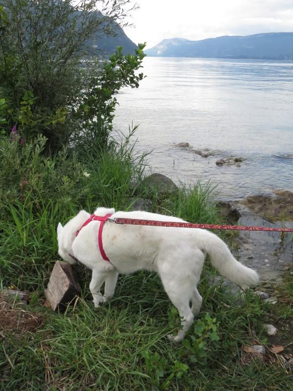 Chadka et Yocco au bord des lacs 025_yo10