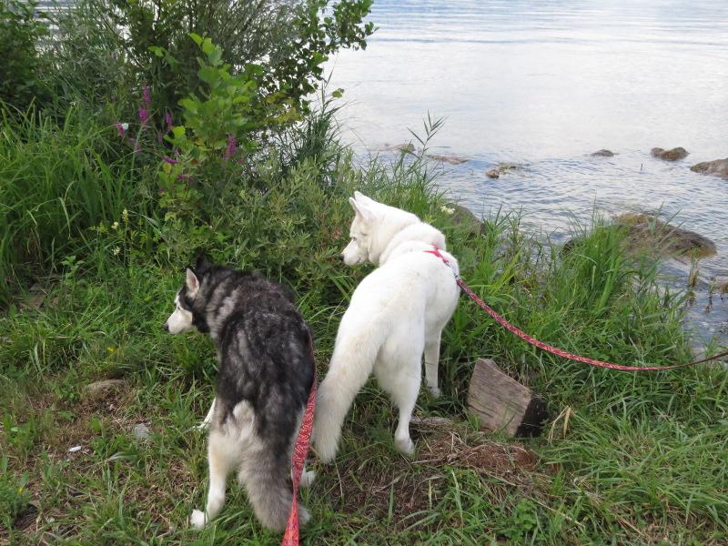 Chadka et Yocco au bord des lacs 026_ch10