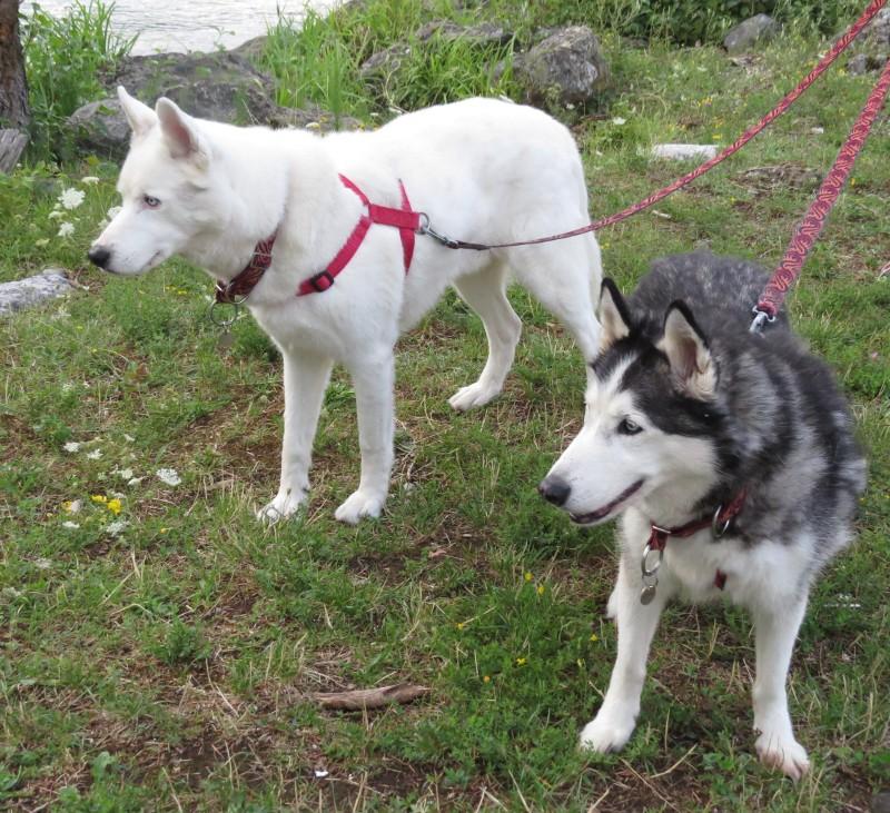 Chadka et Yocco au bord des lacs 028_yo10