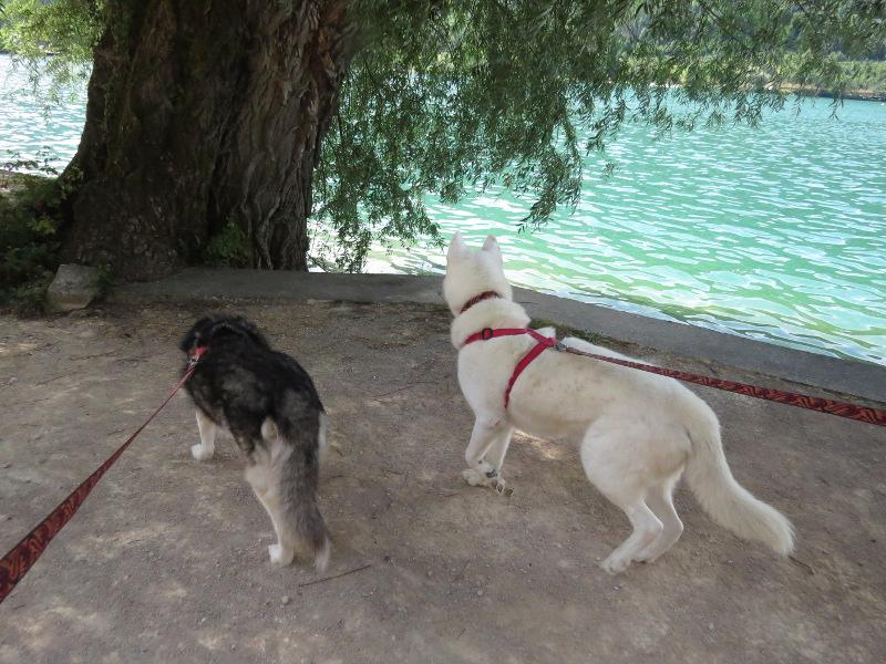 Chadka et Yocco au bord des lacs 05_cha10