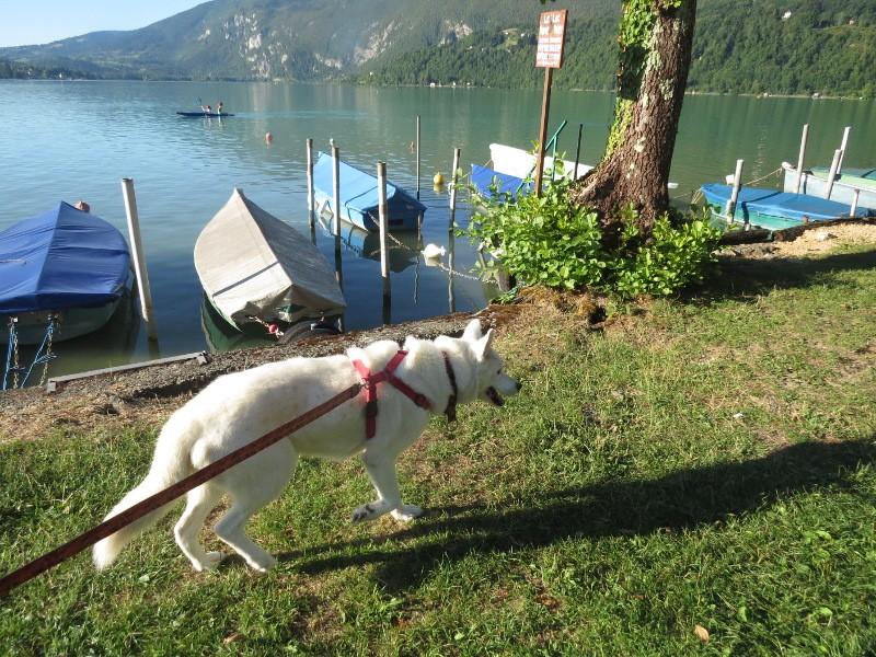 Chadka et Yocco au bord des lacs 41_yoc10