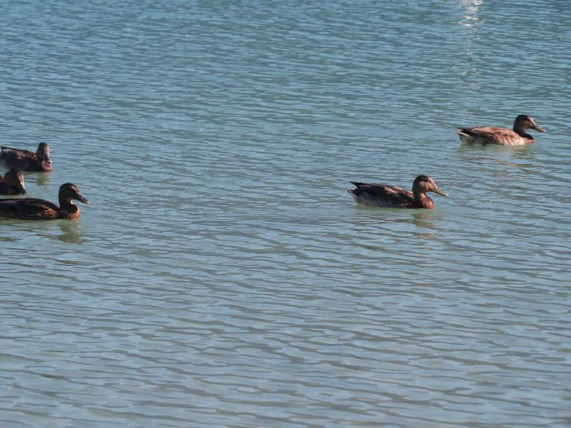 Chadka et Yocco au bord des lacs 48_can10