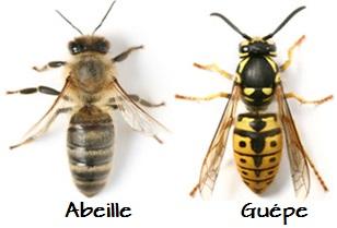 Nid abeilles ou guèpes ? Abeill10