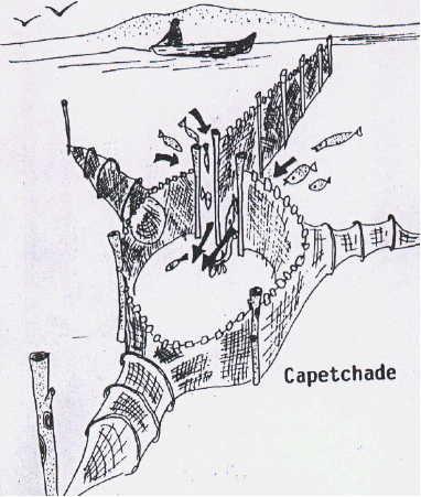 Capetchade à Pérols. hérault France (trouvé) - Page 3 Capetc10