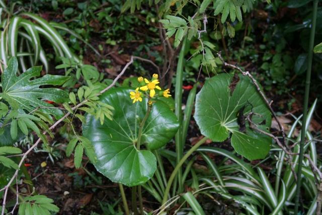 Quelques fleurs après la pluie Farfug10