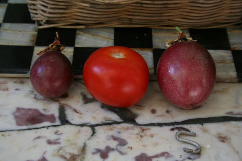 fruits de la passion et citrons Fruit_10