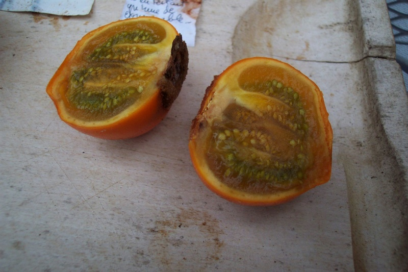 Solanum quitoense - lulo Fruits11