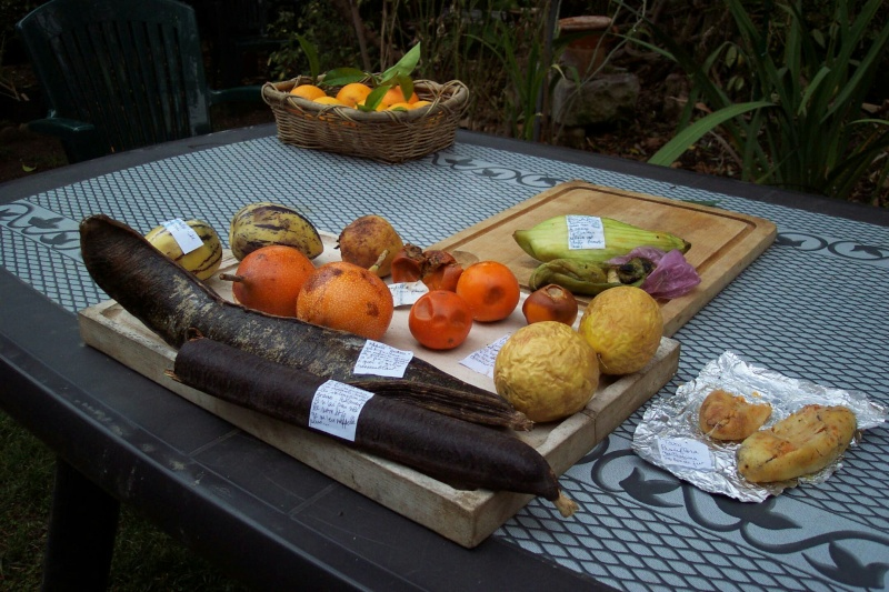Solanum quitoense - lulo Fruits12