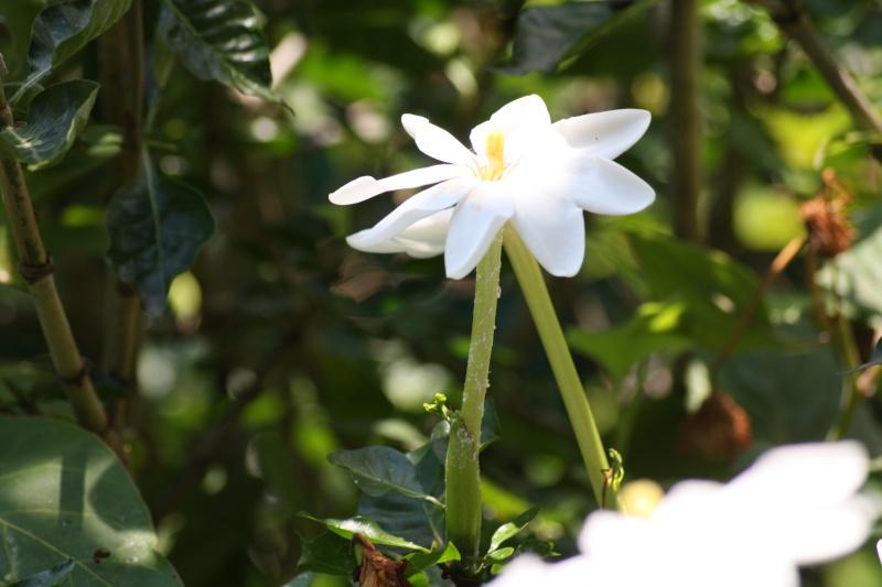 nos plantes parfumées - 2011-2015 - Page 6 Garden12