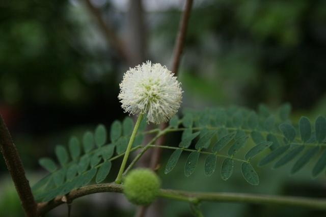 Fleurs de début d'été Leucae10